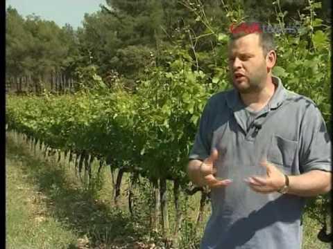 natura't---viticultura-biodinàmica