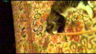 Кошка-матрешка ))).mp4