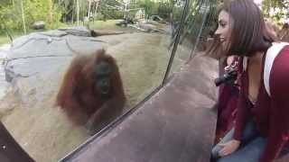 Expert Tips on Visiting the San Diego Zoo