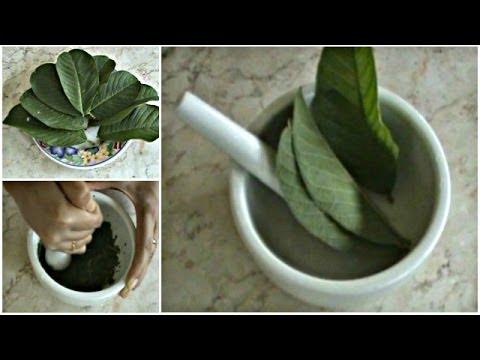 cara-menghilangkan-komedo-secara-alami-dengan-herbal-daun-jambu-biji-muda