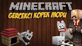 GERÇEK KÖPEKLER MODU!! Minecraft Mod İncelemeleri (Köpekler Ve İcracılar) - Bölüm 7