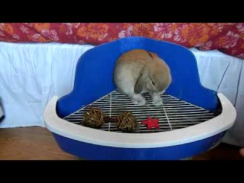 How to Litter Box Train your Rabbit - YouTube