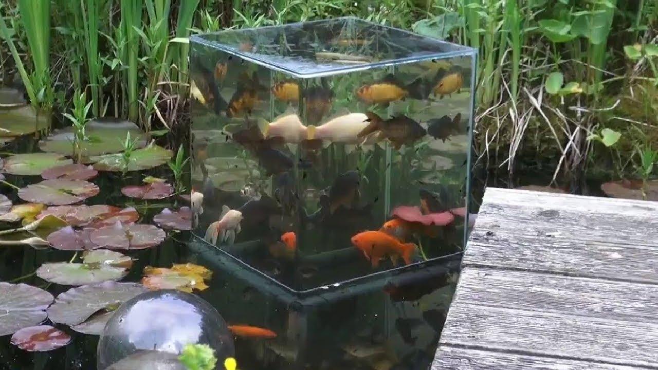 Fabriquer Une Tour A Poisson un aquarium inversé pour observer les poissons