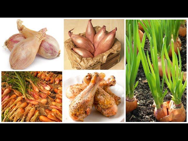 Лук-шалот Zebrune (Зебрюйн) – «куриные бедрышки Пуату»