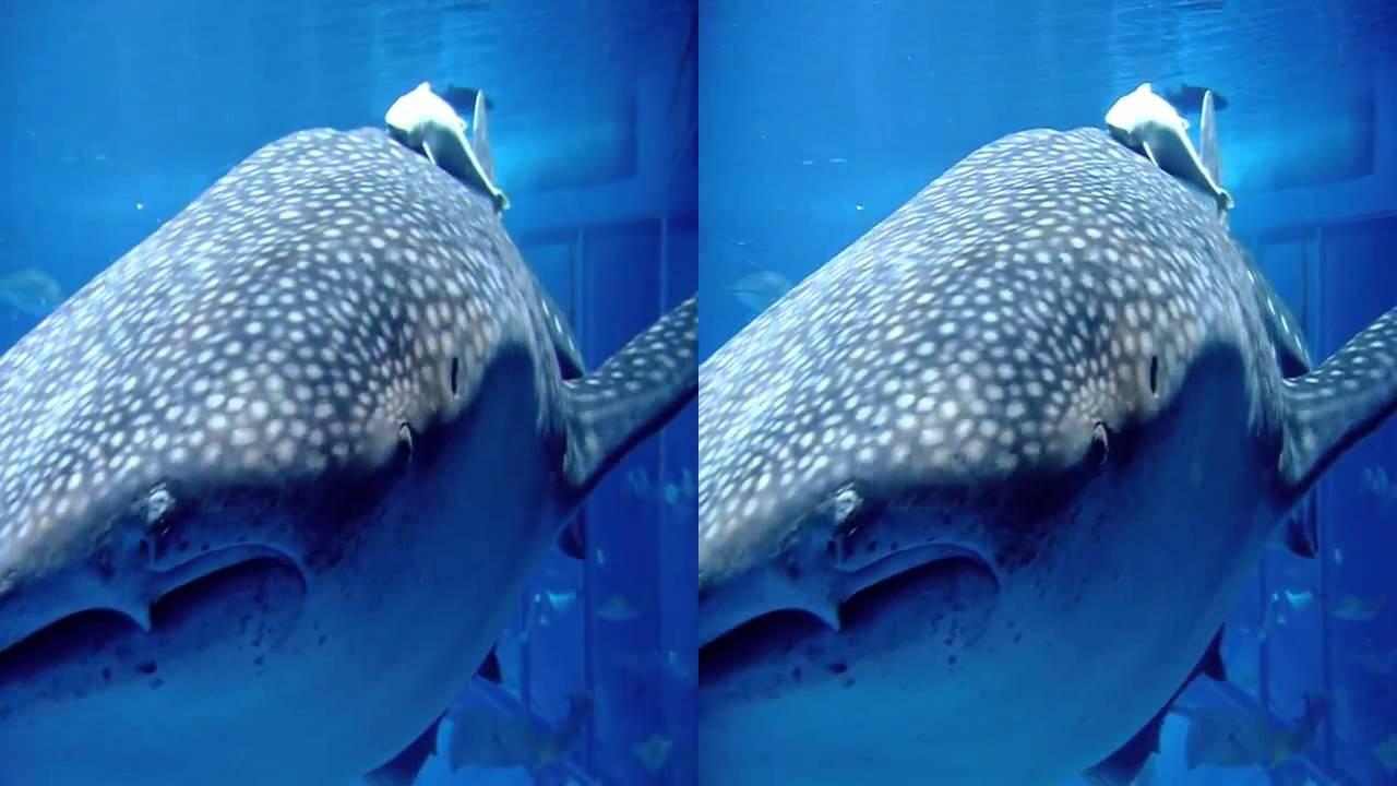 Sony bravia 3d tv demo 3d video aquarium 3d. Mp4 youtube.