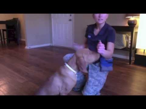 Puppy obedience training - sit, down, come, circle - Valor K9 Academy