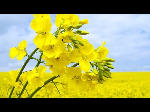 "Peaceful Music, Relaxing Music, Instrumental Music ""Beautiful World Poland"" by Tim Janis"