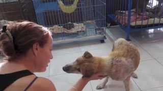 Prancing Poni - Street Dog Rescue