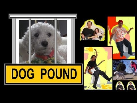 Rescue Dog Rap - Born To Run - The Fastest Poodle and The Wolf Rock Band - Skateboard Mush