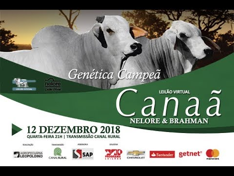 Lote 14 Fava da Canaã BCAN 3447 Forja da Canaã BCAN 3448 Copy