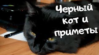 Черный кот и приметы