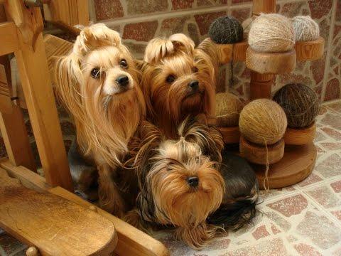♥ Handgesponnene Wolle aus Unterwolle vom Hund_пряжа из Собачьего пуха ♥