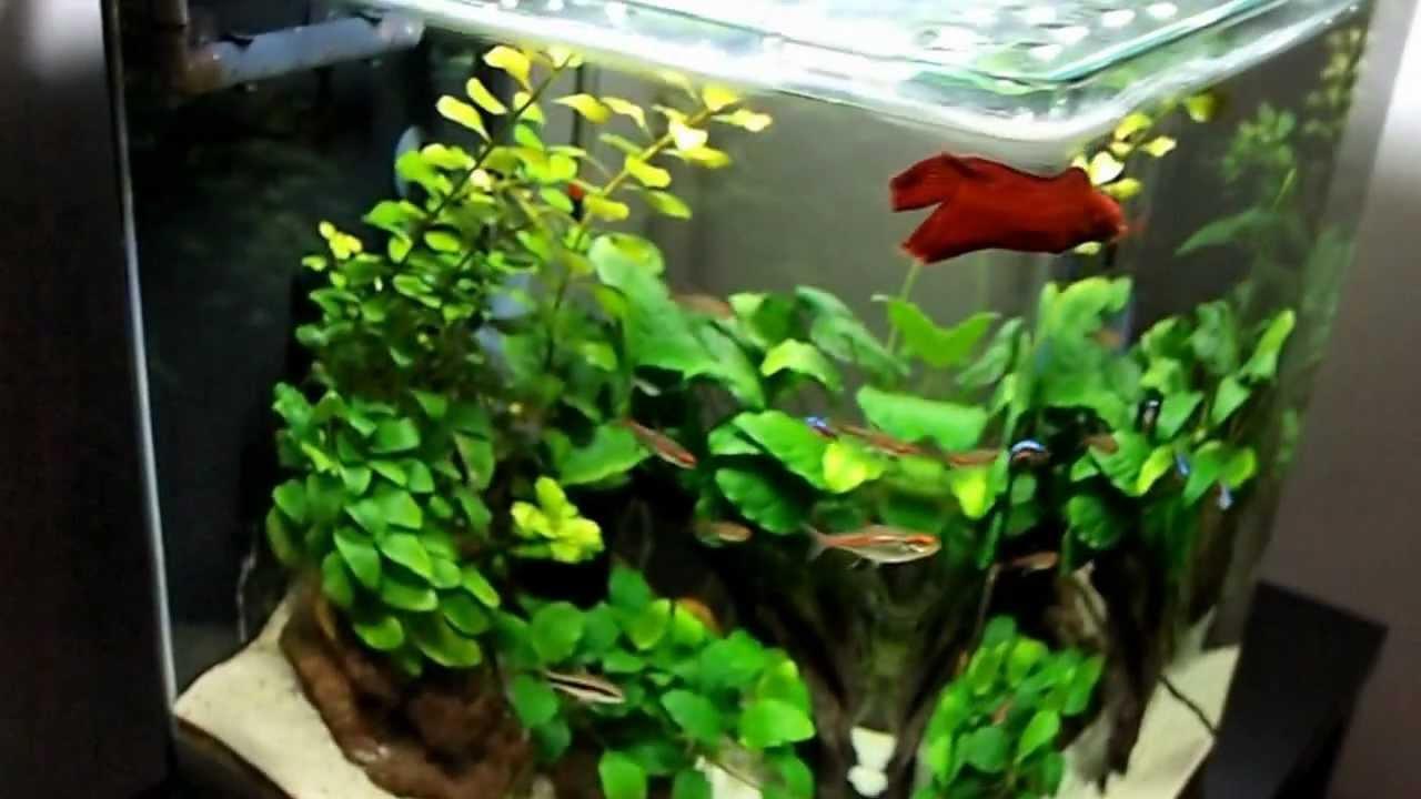 Freshwater nano cube aquarium day 202 youtube for Aquarium cuve