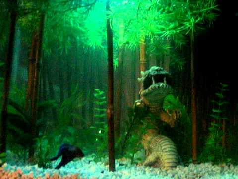 My betta jungle bamboo youtube for Betta fish water temp