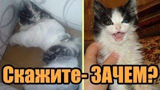 Дети скинули котенка с 8 этажа, а потом наблюдали, как он падал вниз…Спасение котенка
