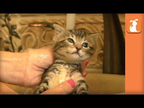 Beautiful Kitten Has a Nice Relaxing Bath - Kitten Love