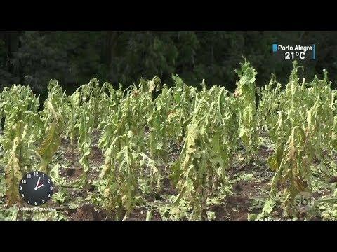 Chuva de granizo provoca estragos e prejuízos no Rio Grande do Sul | SBT Notícias (01/03/18)