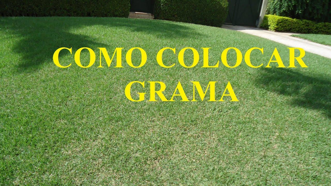 Como plantar grama em placas. - YouTube