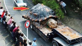 ВОТ ПОЧЕМУ ОТ НАС СКРЫВАЮТ ГИГАНТСКИХ ЖИВОТНЫХ. Самые большие животные на Земле