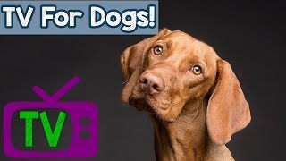 Dog TV for Relaxing music - Videos for Dogs to watch at home - TV for Dogs with anxiety and stress