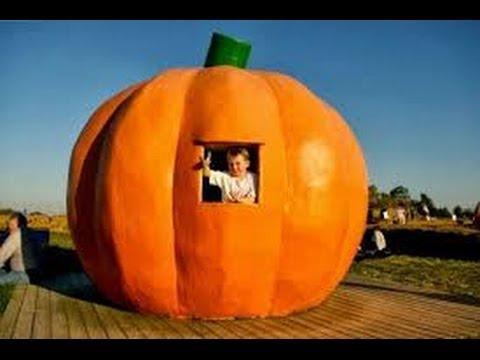 Giant Pumpkins Video