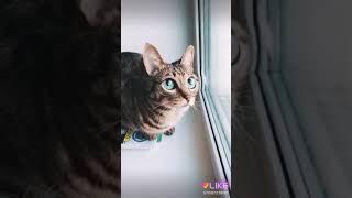 Кот с большими глазами