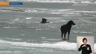 В Мариуполе более 8 часов спасали стаю собак из замерзшего моря