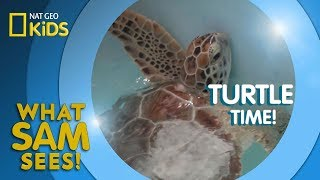 Turtle Time! | What Sam Sees
