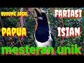 Suara Jagal Papua Bikin Burung Murai Gacar  Mp3 - Mp4 Download