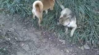 Dog Socialization | Redeeming Dogs | Dfw Dog Training