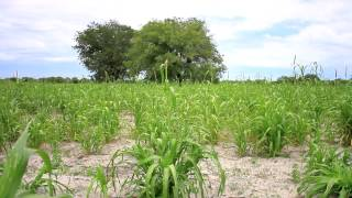 Namibian Farmers Adapt to Changing Climate