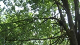 Play Bendin' Like A Willow Tree