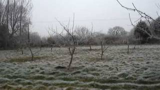 Orchard In Winter-wassail