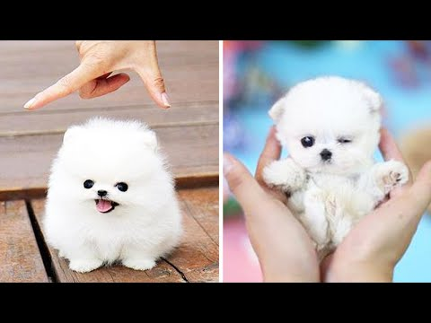 😍Cute Puppies Doing Funny Things 2020 😍 #9 Cute Animals