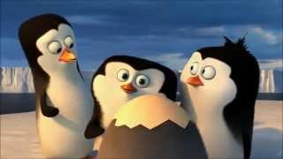 Пингвины Мадагаскара. Детство.
