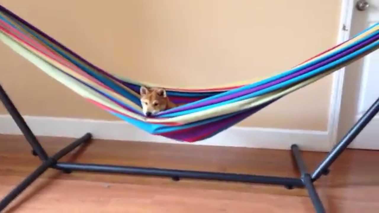 senior vivere shop hammock hammocks hook fasteners set with double com