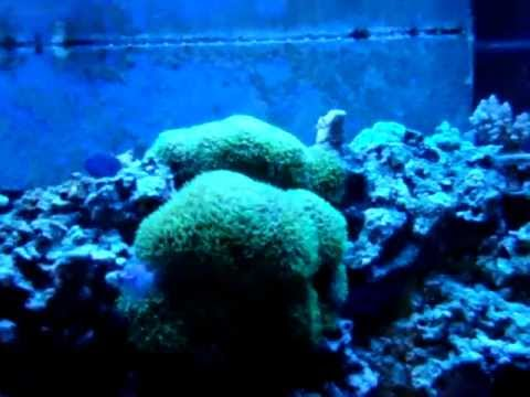 Mixing Magnesium And Calcium For Reef Tank