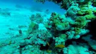 Тест видео GoPro Hero 3+ Дайвинг, Красное море, Египет. Тест подводной съемки.Veryvery.ru(GoPro Hero 3+ прекрасно подходит для отдыха! Снимайте и под водой! Наслаждайтесь качественными и красочными виде..., 2014-06-02T08:22:13.000Z)