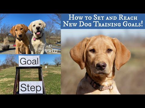 How to Set and Reach New Dog Training Goals!