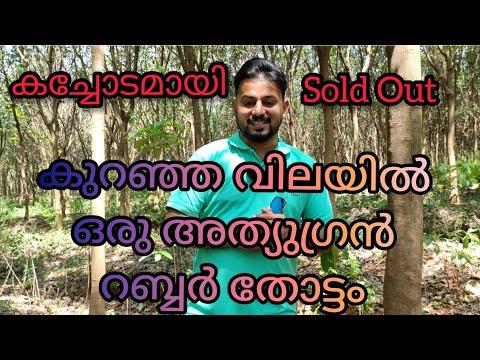 #Sold Out#കച്ചോടമായി#Rubber plantation for sale#മുണ്ടൂർ ഒൻപതാംമൈൽ#റബ്ബർ തോട്ടം#