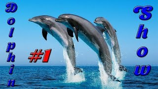 #1 Дельфинарий Немо Алматы шоу дельфинов  /Dolphin show Dolphinarium Nemo Almaty/