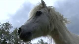 CERZA, dans les coulisses d'un parc zoologique (Documentaire animalier)