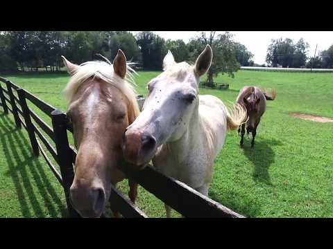 Johnny Depp Bluegrass Farm Auction Lexington Ky
