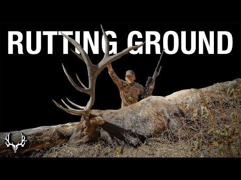 Rutting Ground – A Dream Rifle Elk Hunt