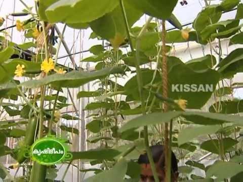 Hi-Tech farming in Perumatty panchayath, Palakkad district by a group of farmers : Success story