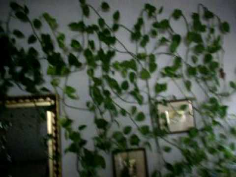 Plantas en interior de una casa youtube for Plantas ornamentales de interio