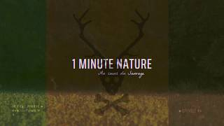 Le Cerf Pirate - 1 MINUTE NATURE - EP 04