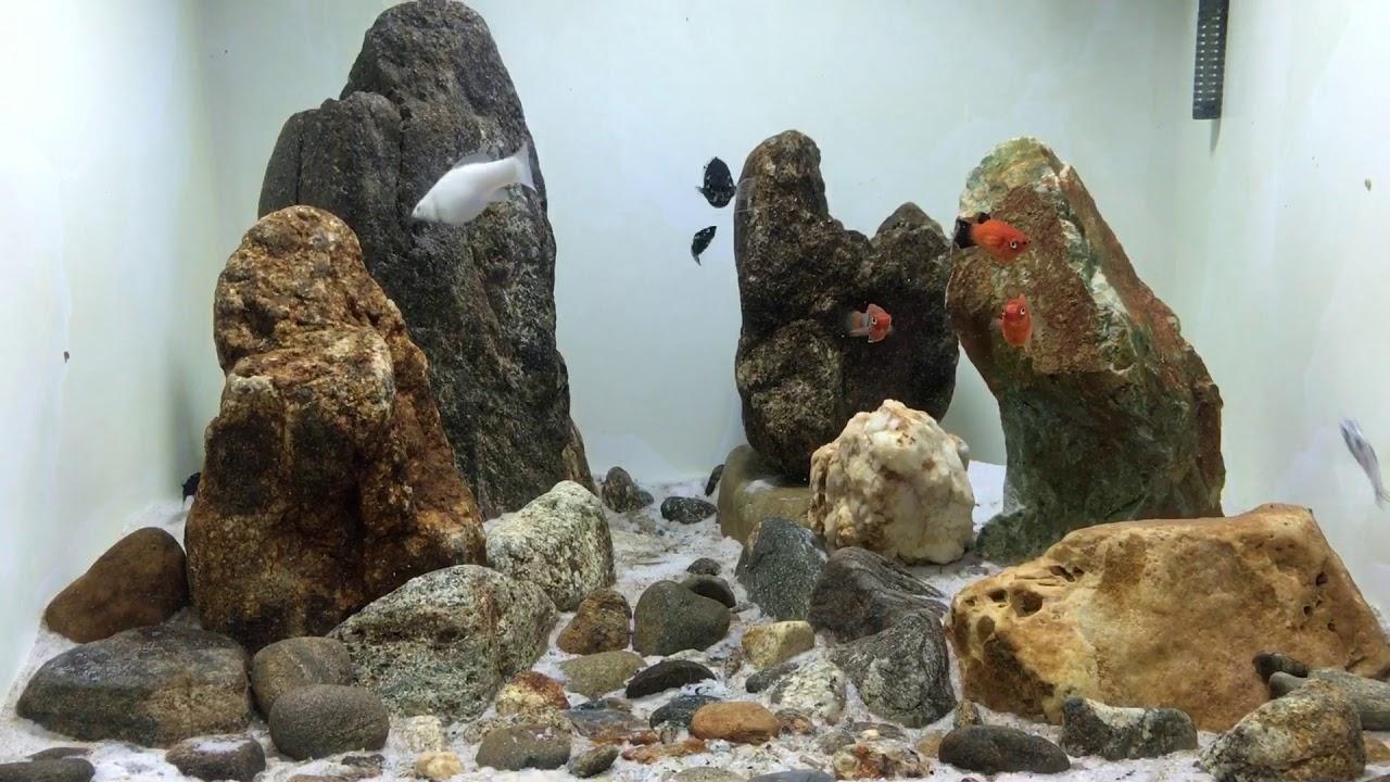 Bể cá đơn giản đẹp làm từ gạch men và 1 mặt kính