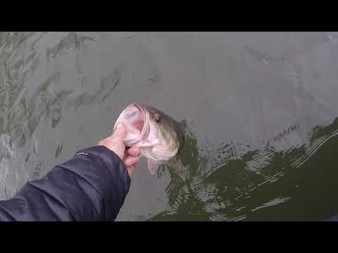 Wobble Head Menace Grub Gets Bites In Cold Water At Tablerock Lake  Practice Vlog