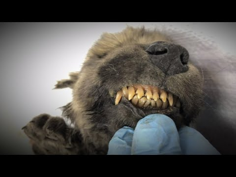 Carbon Dating May Solve This Medieval Murder Mystery from YouTube · Duration:  3 minutes 23 seconds